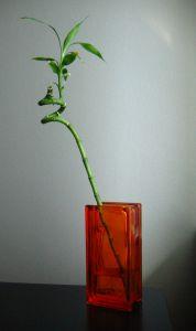 Le piante in casa fanno male ?