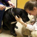 Farmaci veterinari costosissimi..Riceviamo e voltiamo a tutti!!