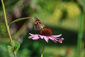 Lotta naturale ai parassiti in agosto