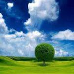 Agroenergia,  un tesoro nelle campagne d'Italia