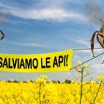 Appello da GreenPeace – Le api stanno scomparendo