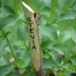 Le Aromatiche – Conoscere  e coltivare le piante aromatiche