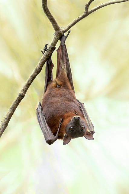 L'importanza dei pipistrelli