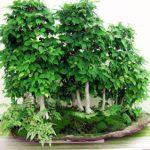 L'Arte di coltivare bonsai