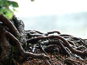 bonsai_garden_3