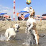 L'AIDAA fa il bilancio dell'estate in spiaggia