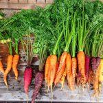 L'Orto in vaso – La carota  ( Daucus carota )