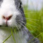 Sterilizzare i coniglietti domestici ?