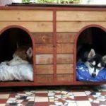Come proteggere i nostri amici cani che vivono all'aperto.