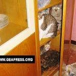 La disposofobia! Non solo accumulo ossessivo di oggetti ma anche di animali..