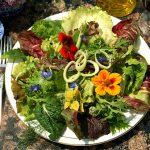 Oggi mangiamo…un piatto di fiori !!!