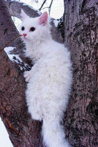 Se un gatto si rifugia su un albero