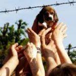 24 Aprile Giornata contro la sperimentazione animale