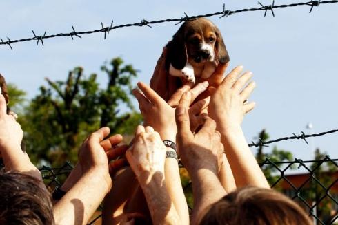 green-hill-cuccioli-liberati1