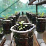 Idroponica: come coltivo la lattuga in giardino?