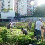 Gli orti urbani promossi anche da Italia Nostra