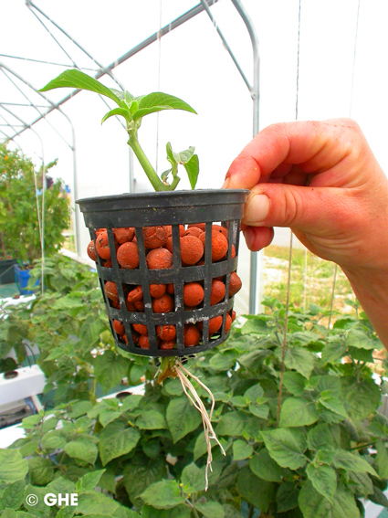 Giardinauta coltivando il tuo pollice verde for Serra balcone fai da te