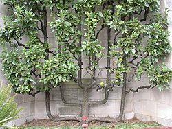 Giardinauta coltivando il tuo pollice verde for Terriccio per limoni in vaso