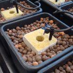 Idroponica, sistemi idroponici e guida completa: come sceglierli