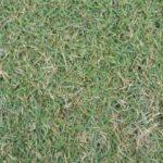 Il tuo tappeto erboso è tutto macchie ? Colpa del feltro …