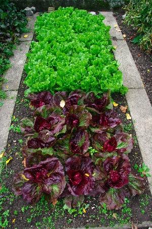 Giardinauta coltivando il tuo pollice verde - Mattonato per giardino ...